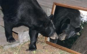 Bear in mirror